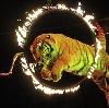 Цирки в Кобринском