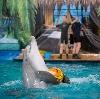 Дельфинарии, океанариумы в Кобринском